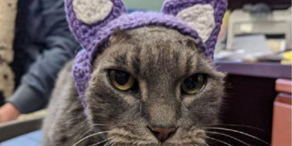 Wisconsin stray cat loses ears to infection, gets new set of purple crocheted ones