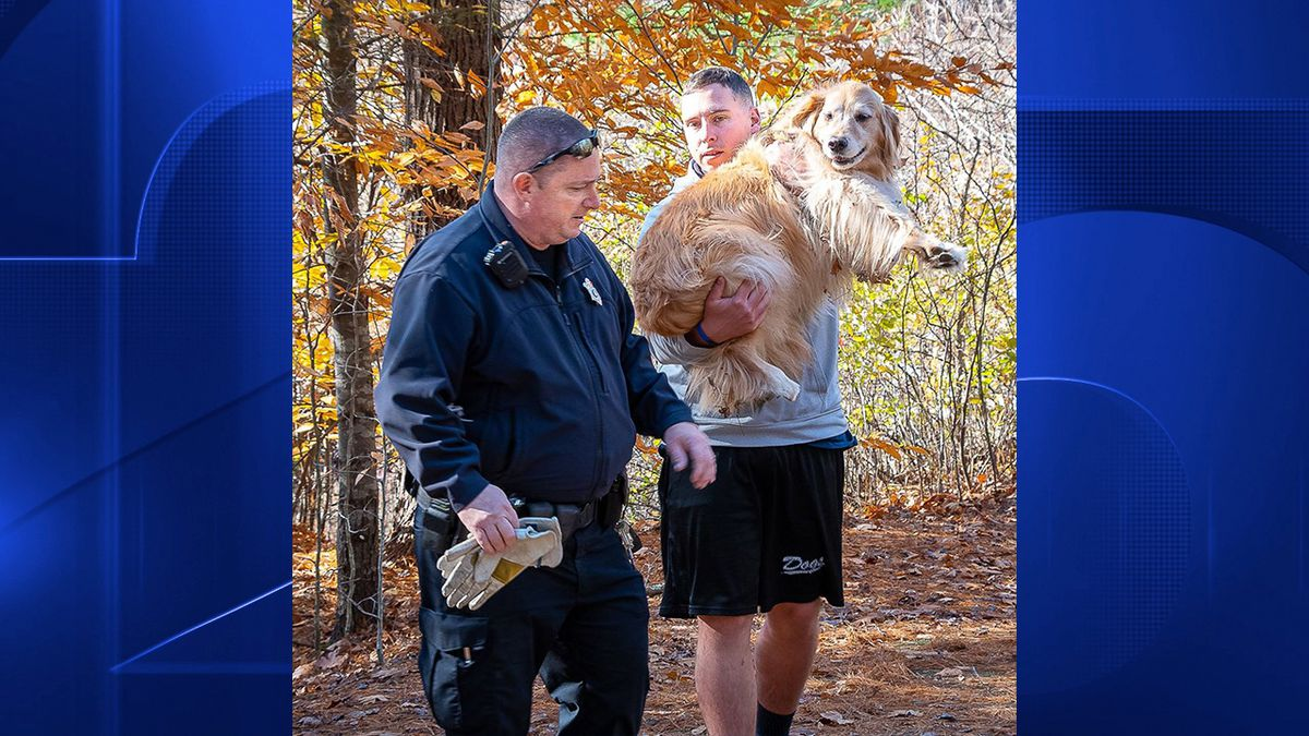 Off-duty Cohasset police officer helps owner & 2 dogs in distress