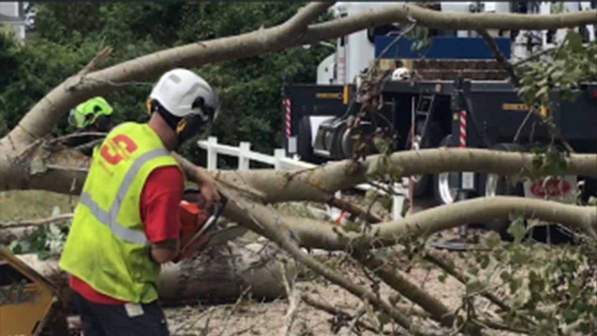 In wake of tornadoes, Eversource to remove 2,000 trees on Cape Cod