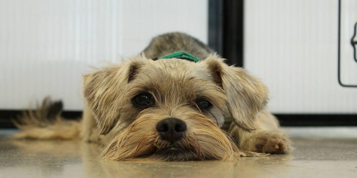 Pennsylvania couple shares wedding with adoptable dogs
