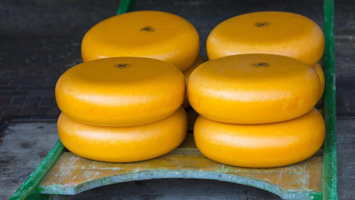 Scientists say eating cheese can help weight loss
