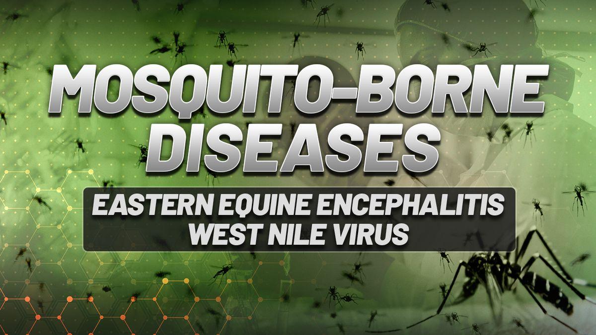 Mosquito-borne diseases in Massachusetts