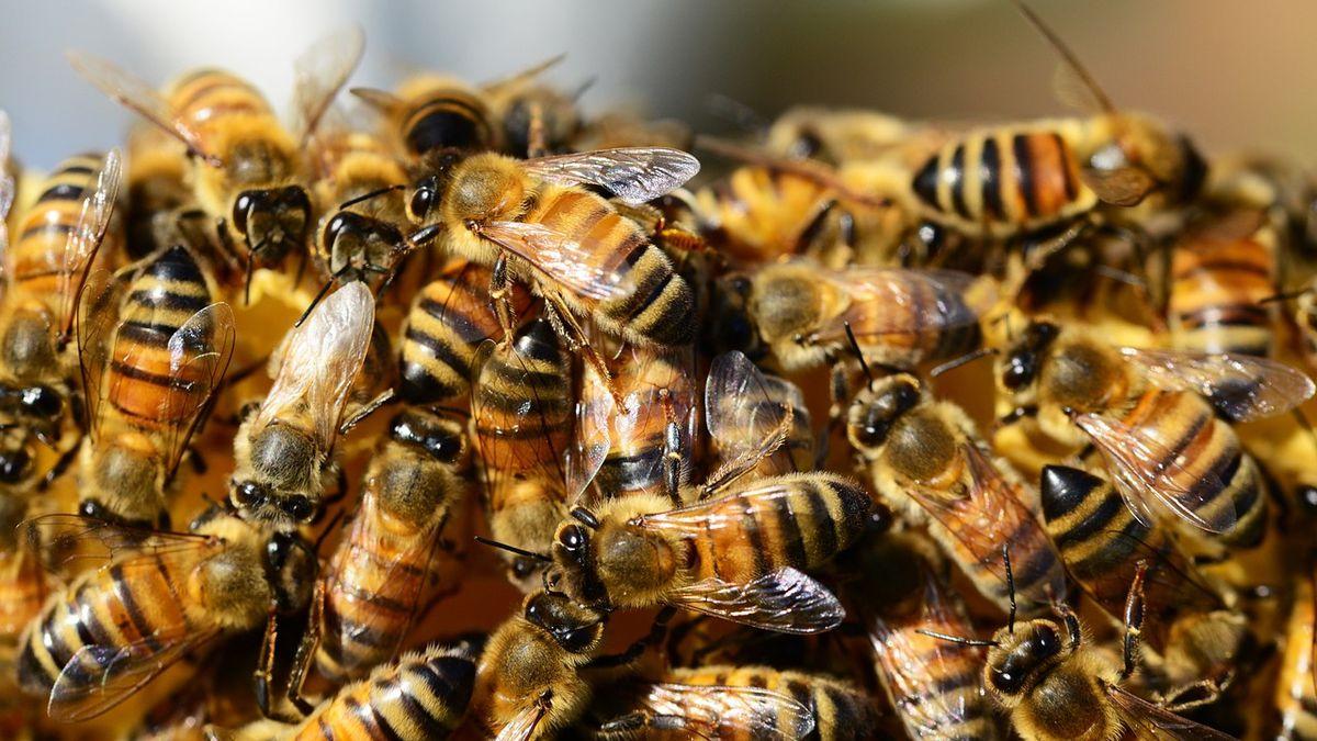 Truck carrying load of honeybees overturns on Texas highway