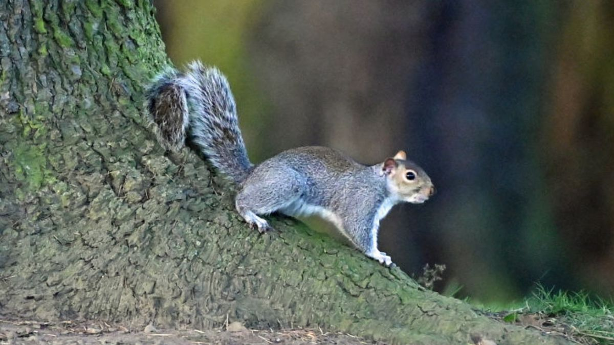 Not so nutty: Kentucky neighbors create squirrel crossing to slow down traffic