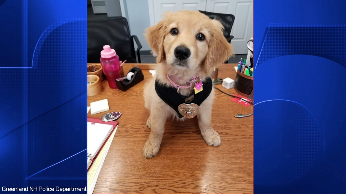 Greenland N.H. police announce newest K-9 officer