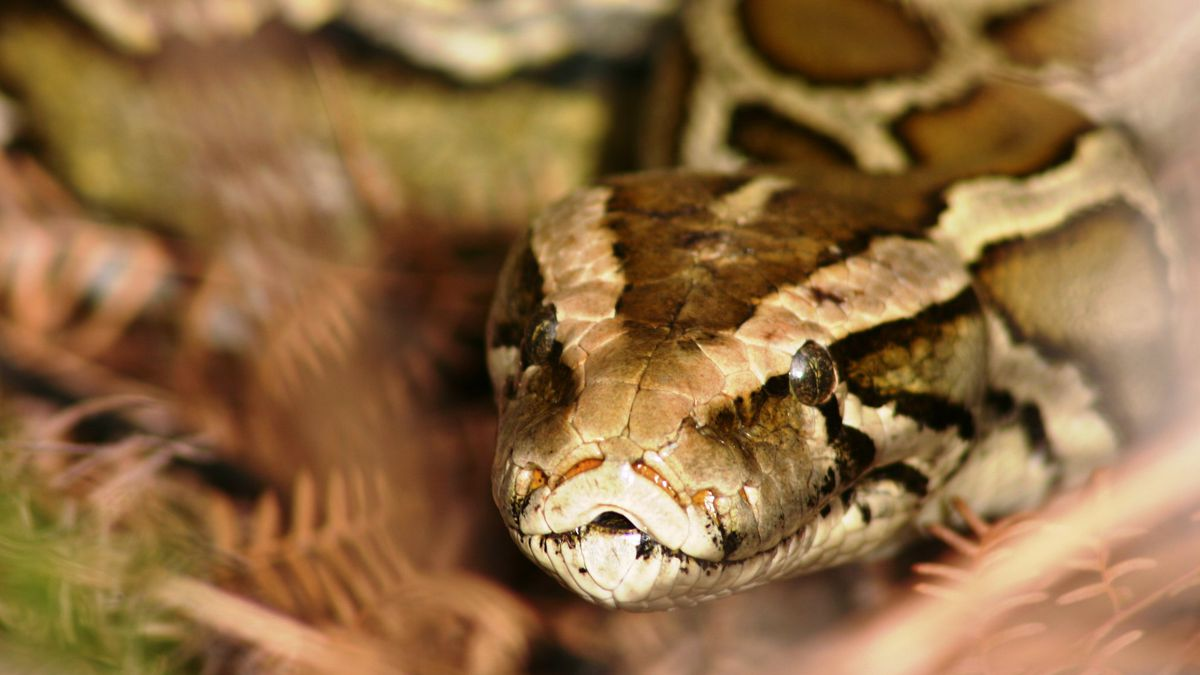 Couple steals $300 albino python from Peabody pet store, police say