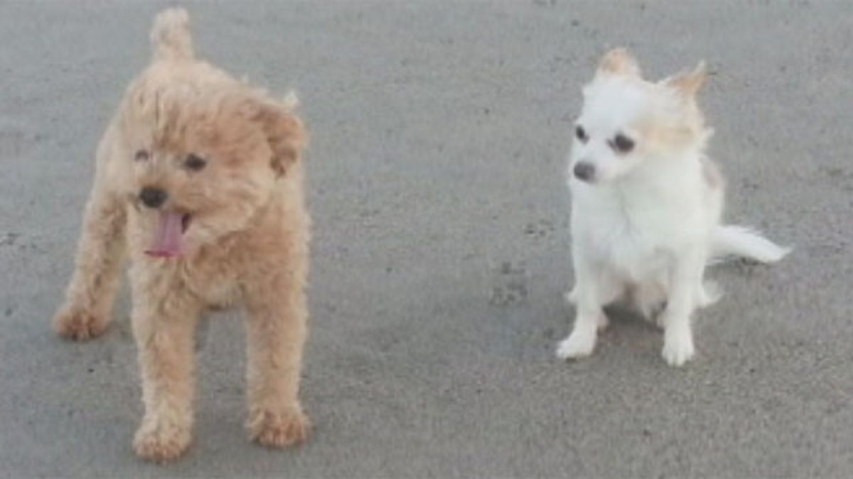 2 dogs attacked by other dog, killed at Grafton kennel