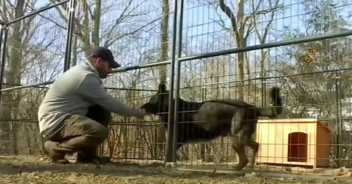 Police K-9s set to be euthanized get a second chance at Seekonk dog center