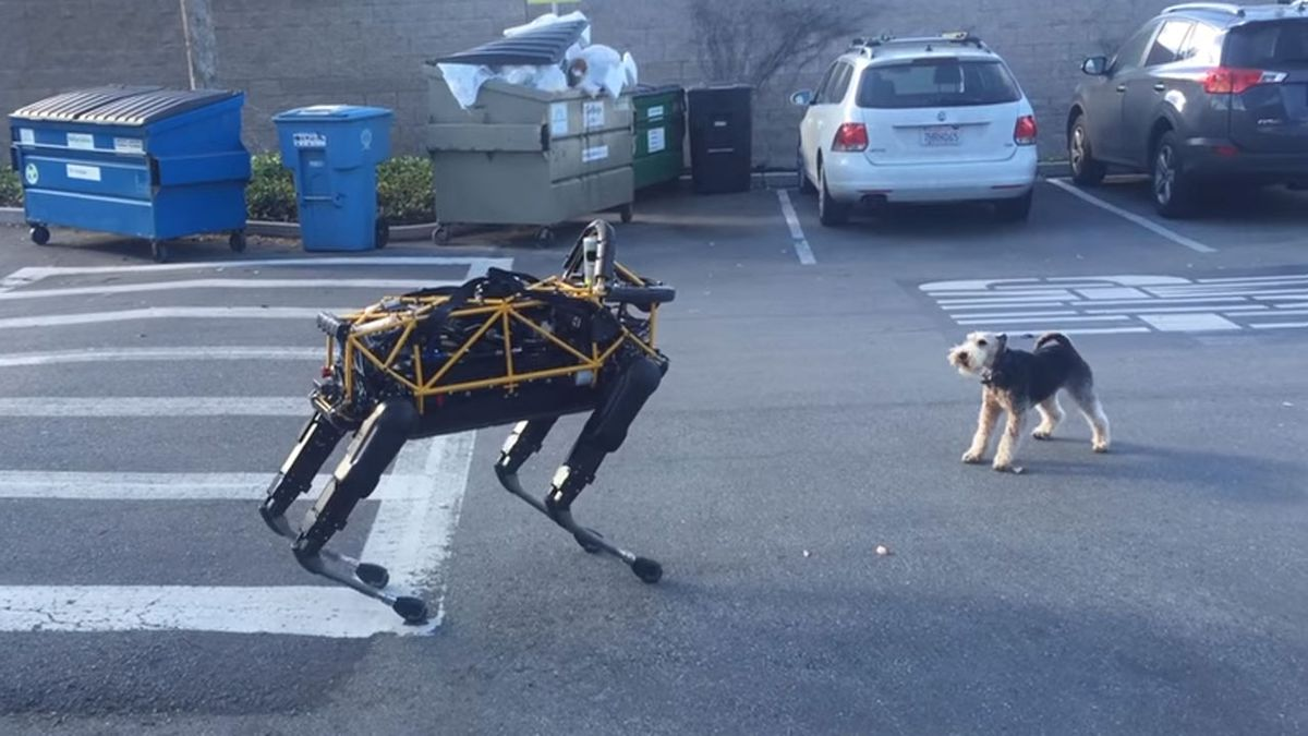 Boston Dynamic robotic dog 'Spot' grabs the attention of real canine