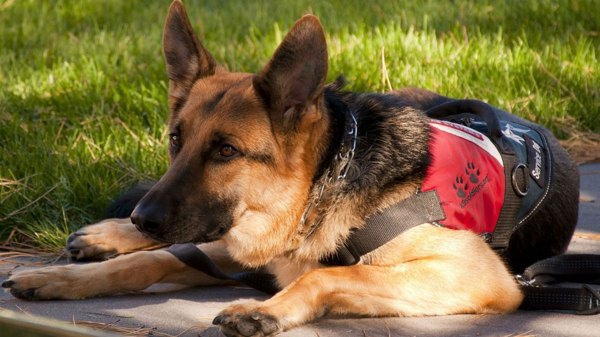 Passing off pet as service animal would cost owners