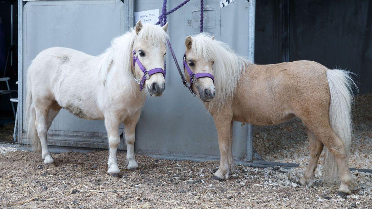 Lipstick on pony: Group accused of terrorizing animals