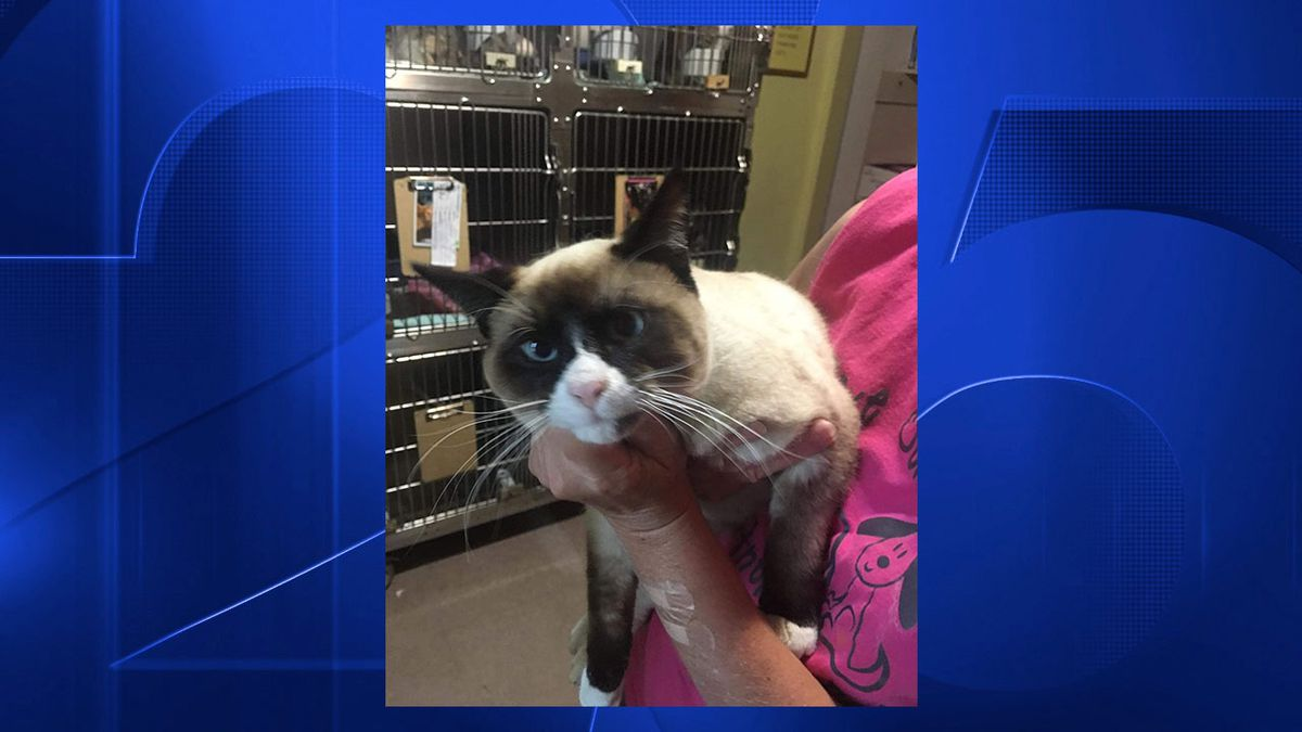 Cat hitches ride on semi from Utah to Florida
