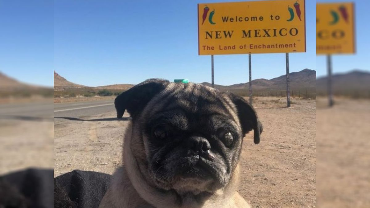 New Mexico woman reunited with pug 6 years after he went missing in California