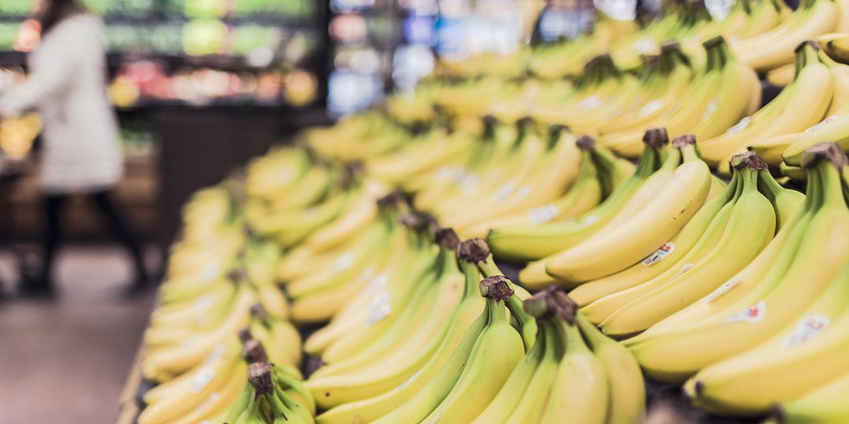 Deadly fungus killing bananas: What is Panama disease Tropical Race 4?