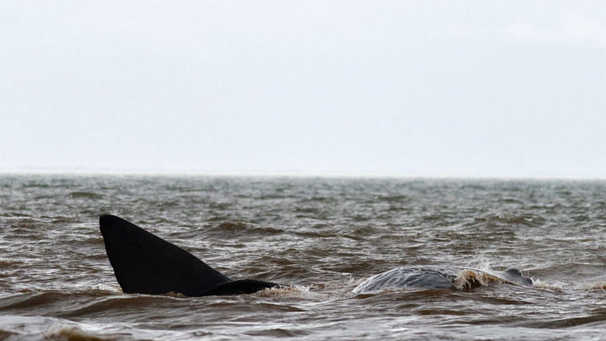Beached whale found in Ocean City has died, officials say